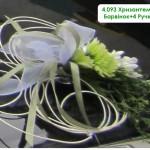 4,093 Хризантема Барвінок+4 Ручки